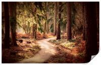 Woodland Walk, Print