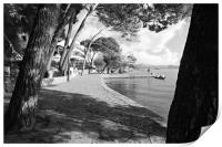 Pine Walk Puerto Pollensa, Print