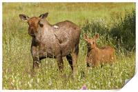 Moose, Print