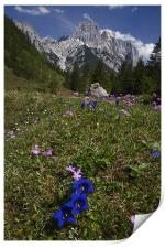 Alpine flowers, Print