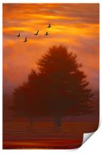 TREES OF AUTUMN, Print