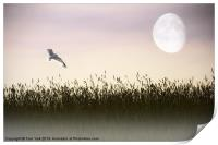 ABOVE THE TALL GRASS, Print