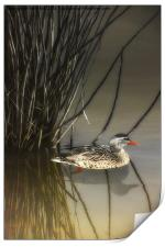HIDING IN THE REEDS, Print