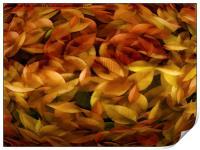 Fallen Leaves, Print