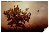 Autumn Serenity, Print