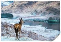 Glencoe Deer, Print