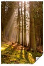 Deanclough forest, Print