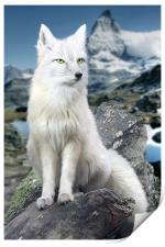 White Fox at Matterhorn, Print