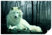 Arctic Wolf, Print