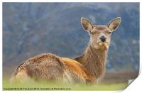 Deer at Glencoe, Print