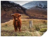 Baby Highland Cow, Print
