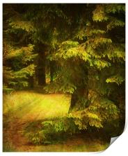 Heart of the Forest., Print