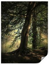 Forest Awakening., Print