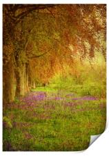 The Bluebell Pathway., Print