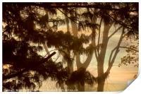Misty Tangle, Print