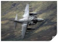 Harrier through the gap, Print