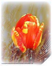 Flower Music, Print