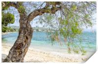 Illa D'Or Through The Trees, Print