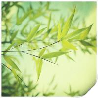 bamboo in the sun, Print
