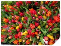 Bunch of tulip flowers, Print