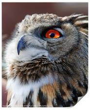 Eurasian Eagle Owl Canvases & Prints, Print