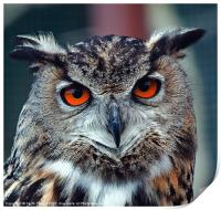 Eurasian Eagle Owl Canvases and Prints, Print