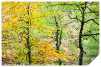 Trees in Autumn, Padley Gorge, Print