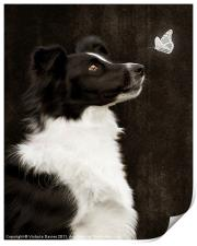 Border Collie with Butterfly, Print