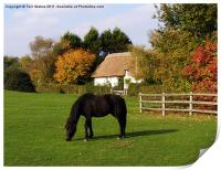 Autumn in the New Forest, Print