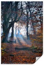 Chevin Forest Park #2, Print
