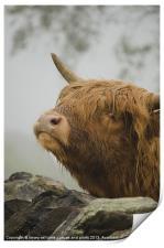 Highland Beast, Print