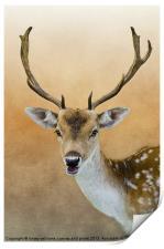 Fallow Deer Stag, Print