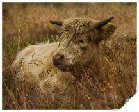Camouflaged Cow, Print