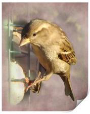 Sparrow, Print