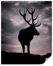 Stag And Sunset 2, Print