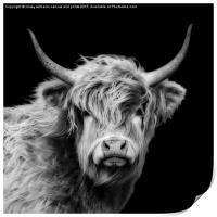 Highland Cow Portrait, Print