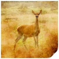 Doe A Deer, A Female Deer, Print