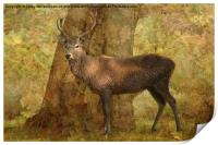 Stag, Print