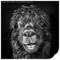 Alpaca. Happy Dayz, Print