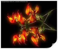 Flame Flower, Print