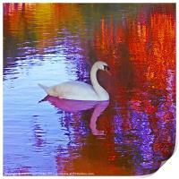 Swan song, Print