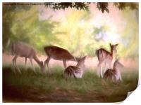 Deer Park, Print