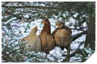 Three French Hens, Print