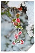 Red & Green Winter Scene, Print