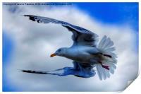 Seagull, Print