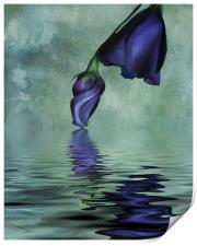 Lisianthus blue, Print