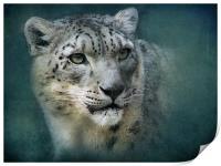 Snow Leopard, Print