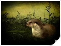 Otter, Print