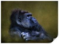Silverback Gorilla, Print