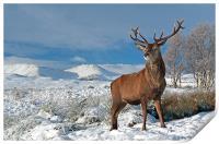 Deer Stag, Glencoe, Print